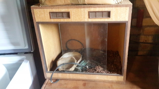 Bearded Dragon box and accesories