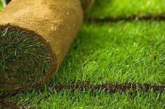 Gauteng Instant lawn