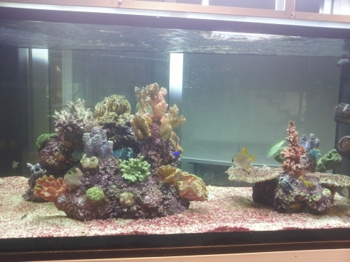 Stunning Marine Tank for sale