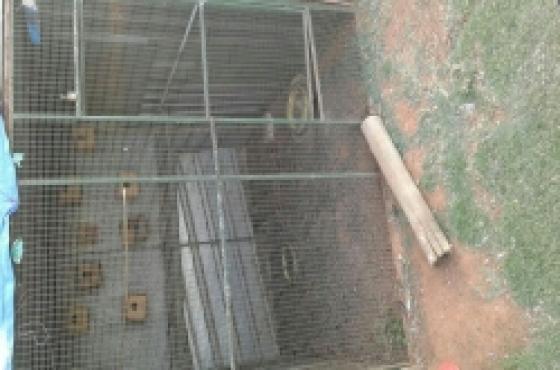 Voel hokke/bird cages