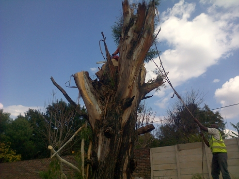 Tree felling in Mpumalanga province using qualified tree cutters at a reasonable price