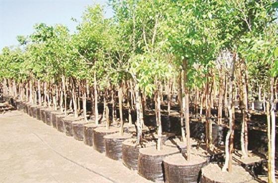Trees, Bome, Plants