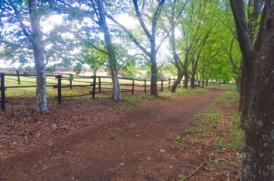 Horse Livery yard