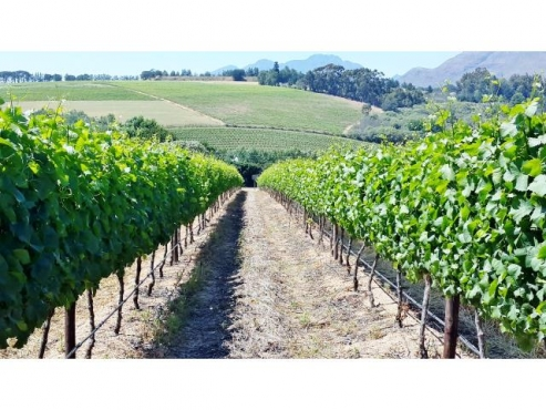 10HA FARM FOR SALE IN STELLENBOSCH