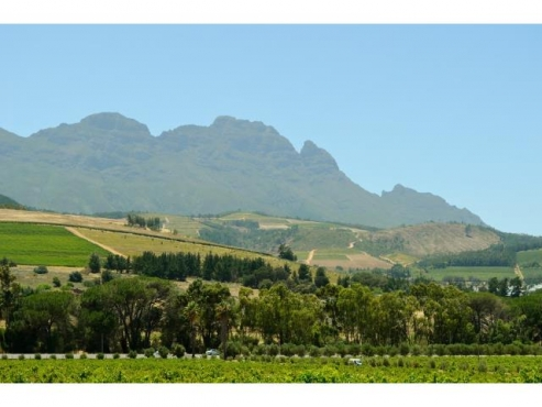 80HA FARM FOR SALE IN STELLENBOSCH