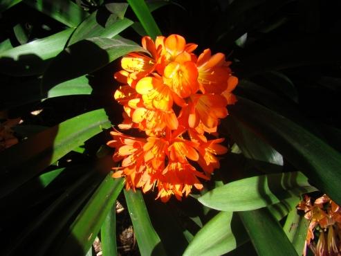 PLANTUITVERKOPING/PLANTSALE