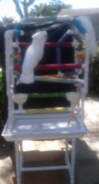 Parrots and Pets