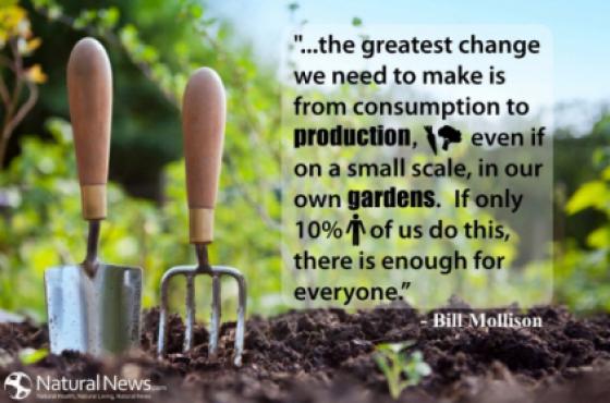 Edible garden, urban food garden design and maintenance, food forests, commercial organic farming