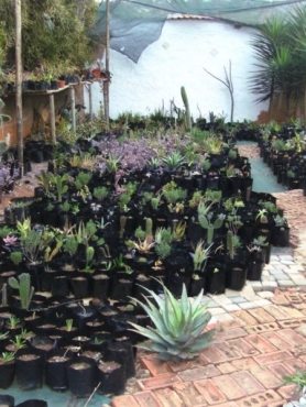 Cacti & succulents for sale (wide variety) 073 377 67 85