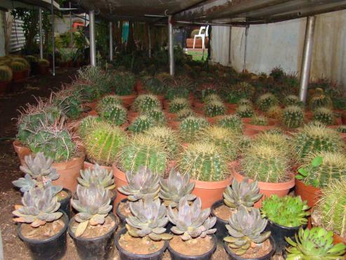 Kaktus en vetplante vanaf R15