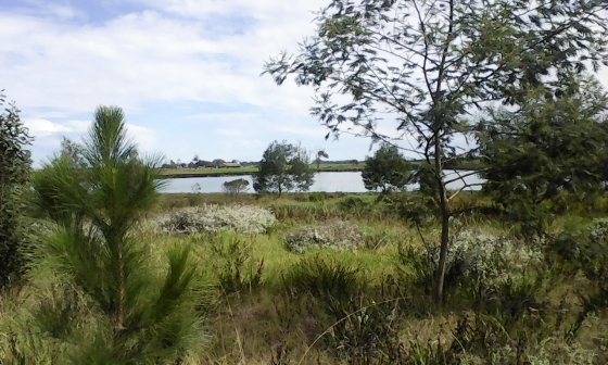TSITSIKAMMA Erf For Sale ! - 1243 m² - StormsRiver Mouth ! Price R 350 000