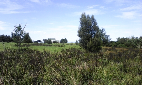 TSITSIKAMMA Land For Sale ! - 1243 sqm. - Price R 550 000
