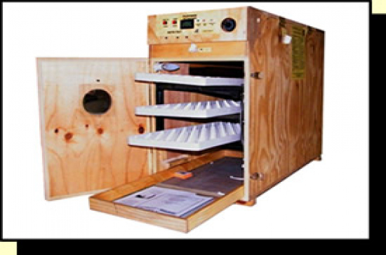Commercial sized incubators for bird/chicken breeding 200 egg and more.