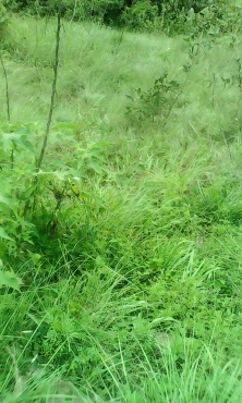Iam selling a land/Site at Luganda ,Demat you can build you home