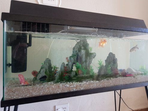120liter fish tank with stand