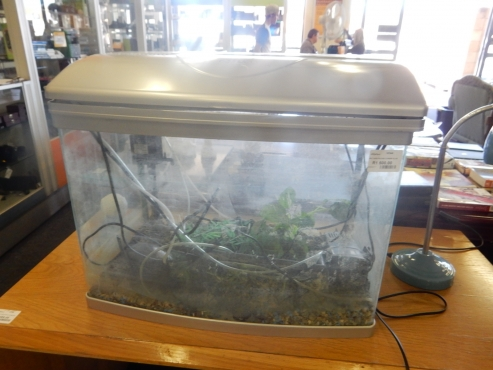Super Baby Fish Tank