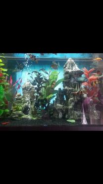 Aquarium for sale - 800 Liter