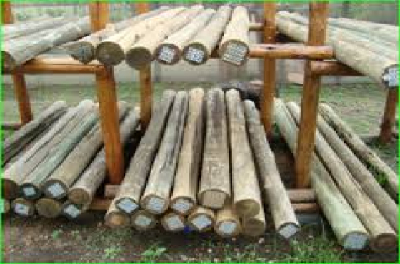Wooden gumpoles 3 m in length selling for = R 55. EACH