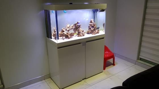 1m starfire marine fish tank