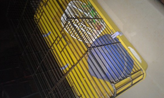 Cage for Pet Hedgehog or Rabbit