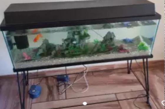 120L Fish Tank & Accessories
