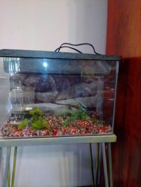 Fish tank and accesories price redused!!