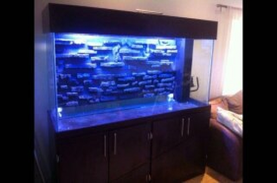 Cutomised Aquariums at a bargain!!