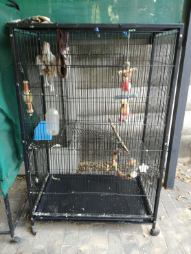 Large cage suitable for birds or critters