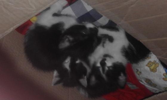 X2 )kittens