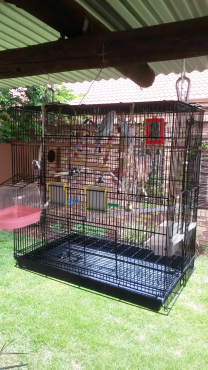 2x Budgies.Plus large cage