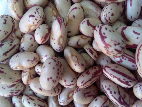 Grade A speckled sugar beans for sale