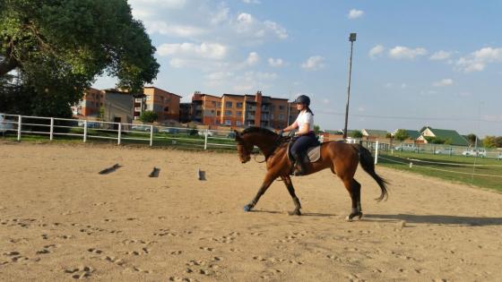 Horseforsale