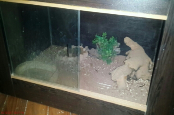 reptile cage for a good price