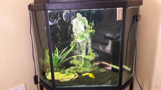 Big corner fish tank