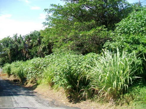 vacant land for sale RAMSGATE DURBAN SOUTH COAST