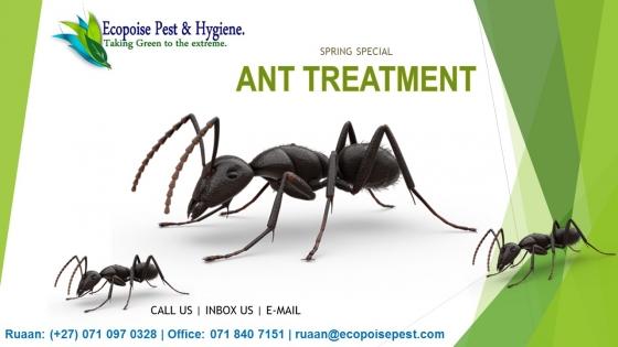 Ant Treatment Services