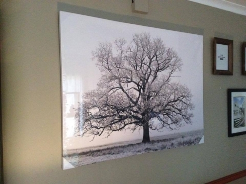 EXPOSED TREE WALL ART AS NEW