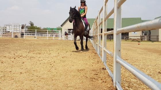 Horse Riding Lessons, Backing, Schooling, Training, Bitless Bridle Training