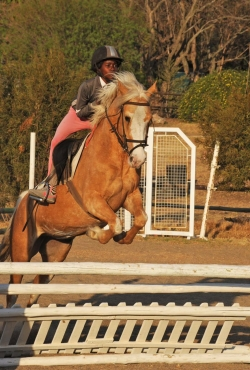 palomino mare jumps jumps like a springbok