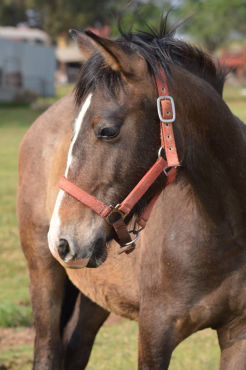 Beautiful and Promising Young horse for sale.