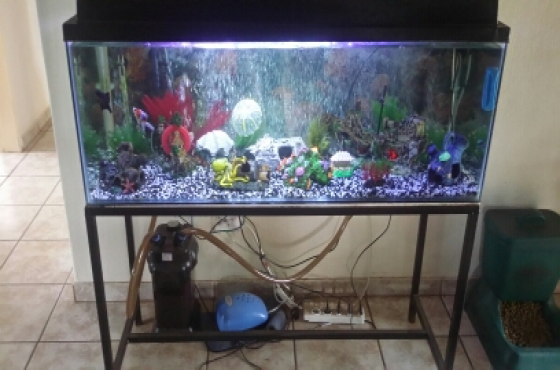 Fish tank complete and running