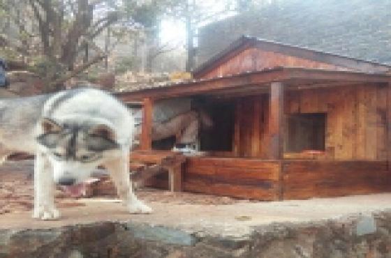 Morden Doghouse
