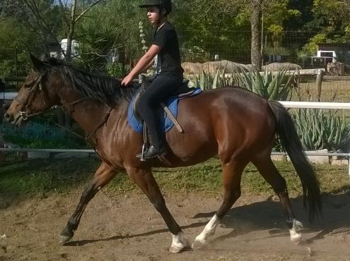 Stunning bay pony mare