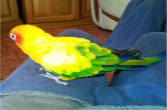 bird stolen,plz help