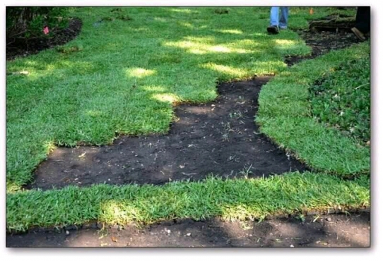 Need Instant Lawn Delivered & Installed Urgently: 061 759 1082