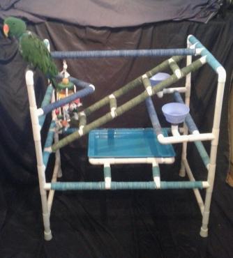 Parrot Pool Gym