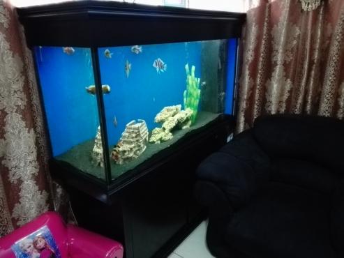 Fish Tank 1400x500x770