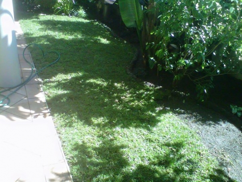 INSTANT LAWN BY GRASS EN ALL WE GRASS KZN CONT 0722129857