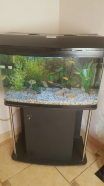 Boyu Fish tank For sale