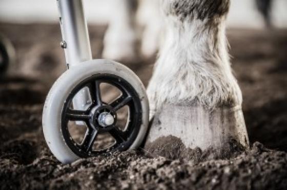 Equine Therapy Riding Lessons - Pretoria